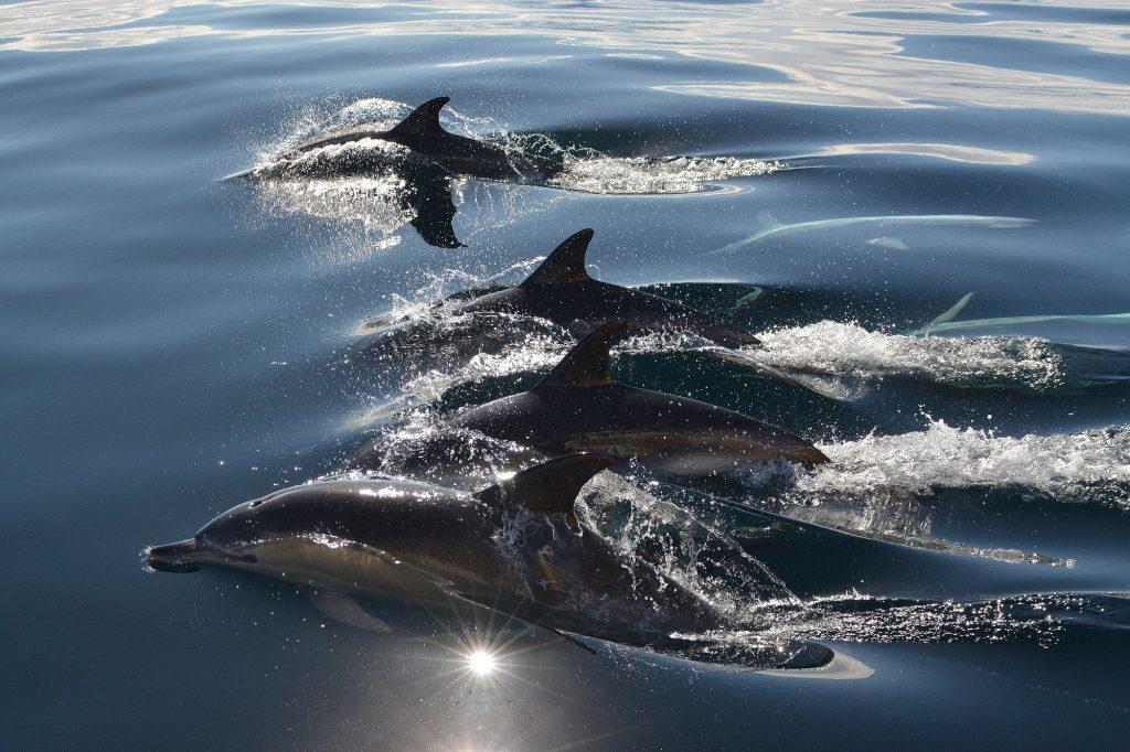 John Burke's winning image, Dolphins.