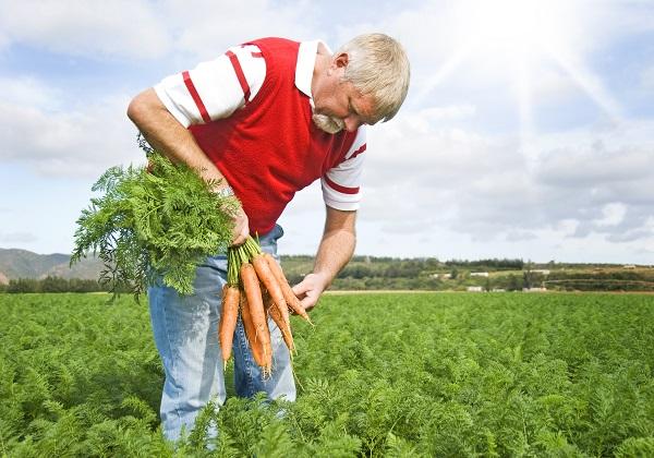 Carrot farmer, supplier