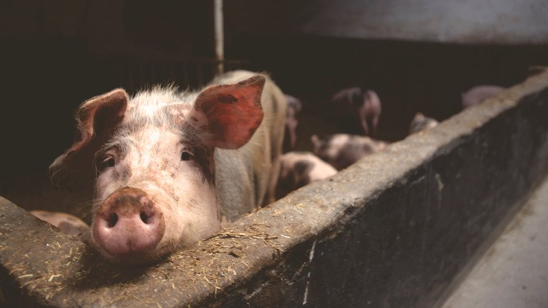 NI's largest pork supplier bought over in £290m deal