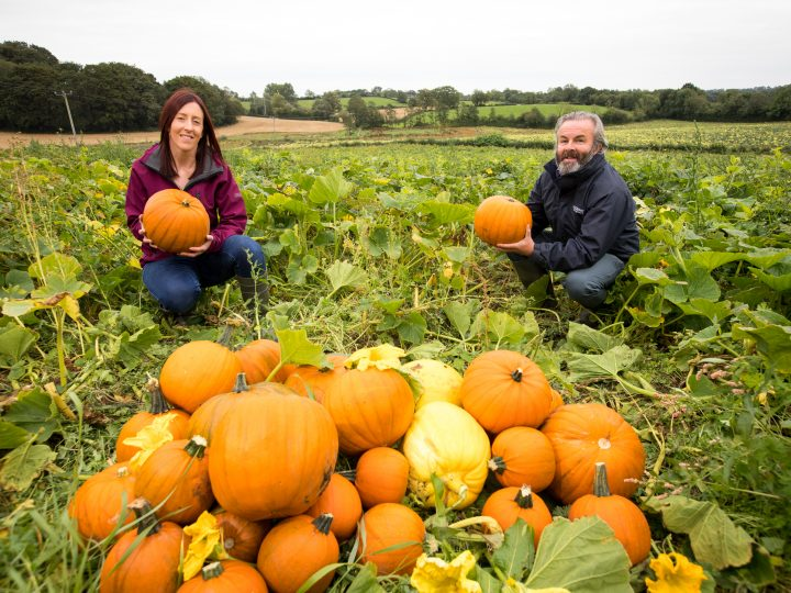 Pick Up a Pumpkin to Help Action Cancer
