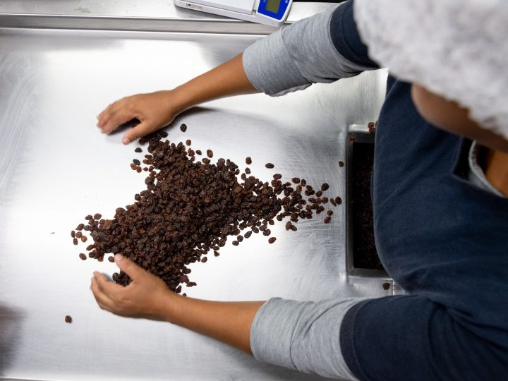 Raisins South Africa responds to the impact of heavy rainfall