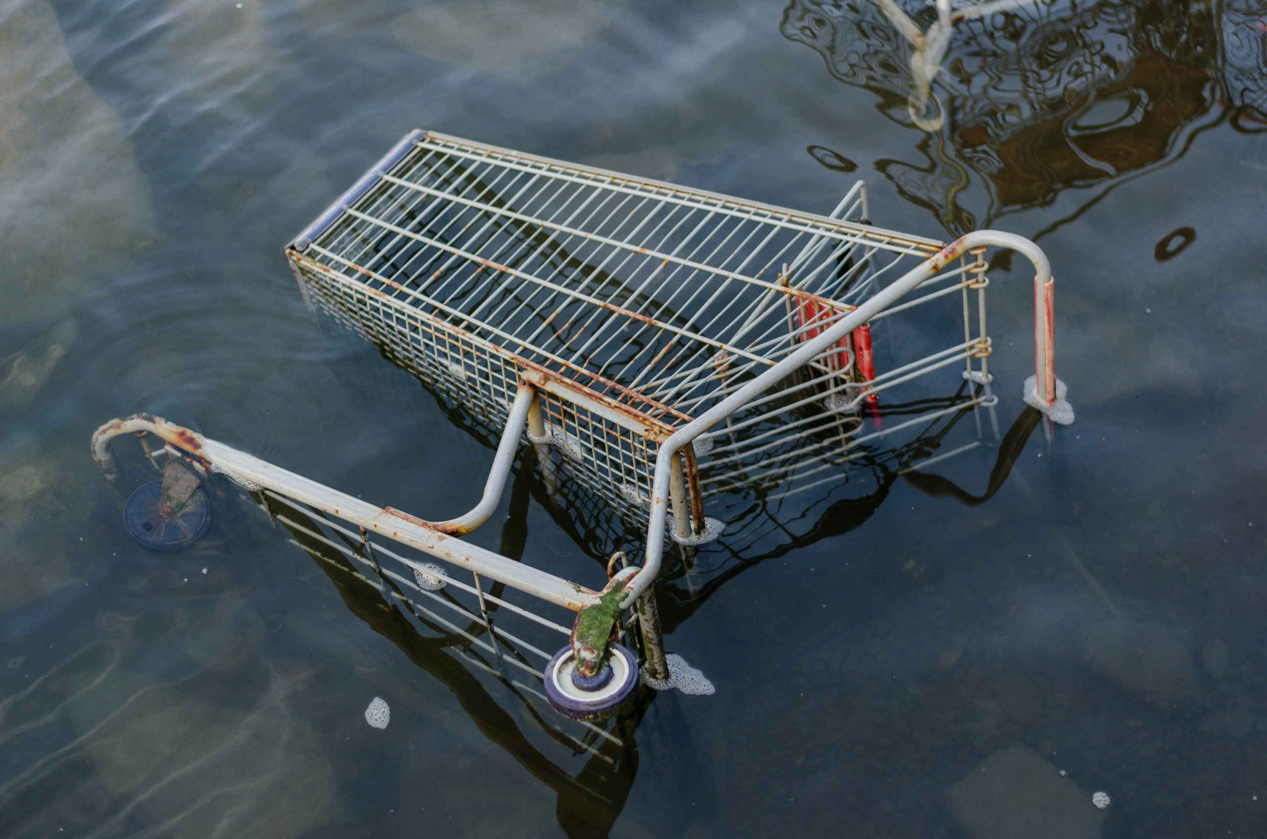 Over fifty shopping trolleys pulled out of Lough Shore by Eco Rangers
